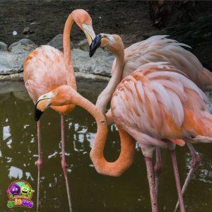 Resguardo-Zoo