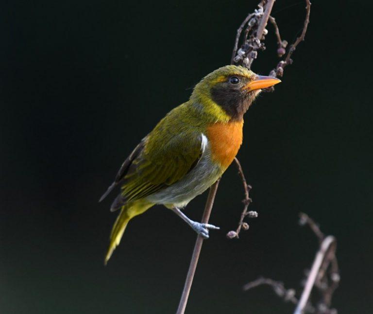 avistamiento-de-aves